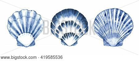 Seashell Set Watercolor Illustration. Watercolour Hand Drawn Sea Shells Isolated On White Background