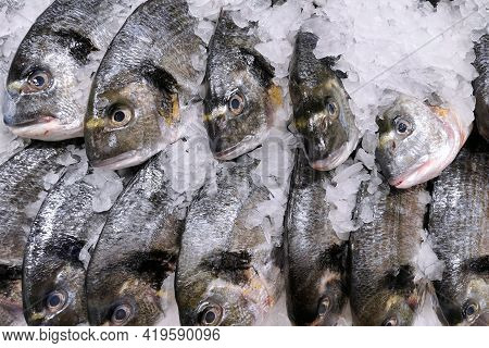 Fresh Chilled Fish (dorada) Lying On Crushed  Ice In A Supermarket. Macro Photo, Close Up Top View.
