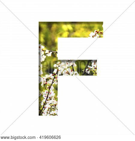 Spring Sunny Font. The Letter F Cut Out Of Paper On The Background Of Blooming Cherry On A Sunny Spr