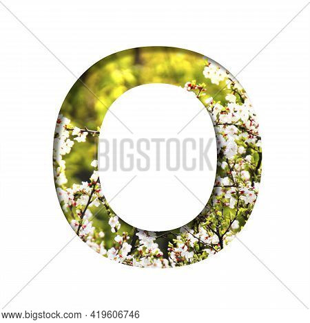 Spring Sunny Font. The Letter O Cut Out Of Paper On The Background Of Blooming Cherry On A Sunny Spr
