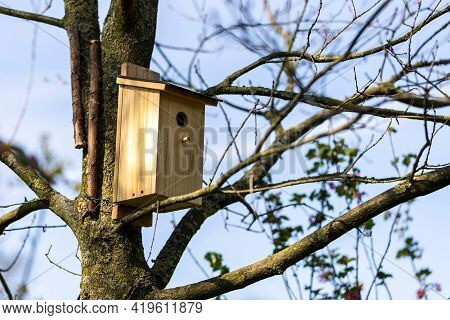 A Homemade Birdhouse Standing On A Branch Of A Leafless Tree In A Garden On A Sunny Day. The Bird Ho