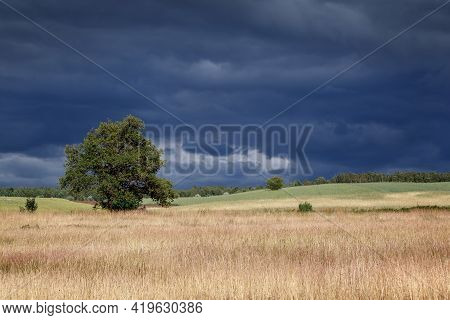 Lithuanian Fields With Alone Tree Landscape And Gloomy Sky Before The Storm