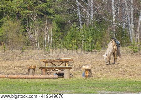 A Lone Harnessed Horse In The Saddle Stands On A Spring Lawn And Eats Dry Grass Near A Wooden Campin