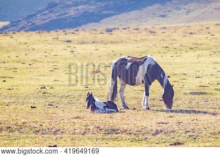 A Horse With A Small Foal Grazes On A Stony Spring Meadow Among High Mountains, Eats Fresh Grass In