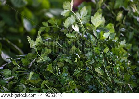 Close Up Of Green Plant For Background, Green Parsley Texture Or Background. Green Leaves Form A Nat