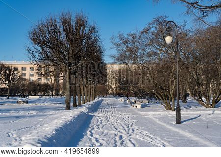 Alley Of Smolny Park. Sunny Winter Day. Sankt Petersburg, Russia.