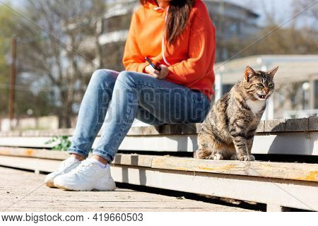A Female Volunteer Sits On A Bench Near A Stray Meows Cat. A Shelter Worker Takes Care Of The Street