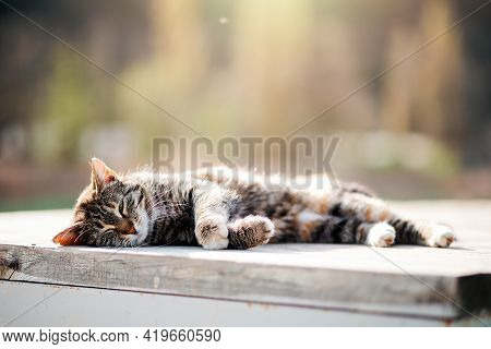 A Stray Cat Sleeps On A Bench. Animal Welfare Day. Copy Space. Concept Of Care For Stray Animals.