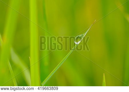 Dew Drop Purity On Green Leaf With Nature Background,in Morning