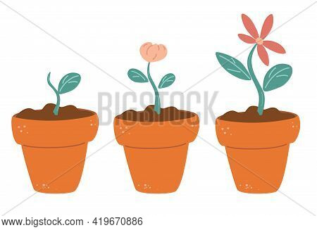 Process Of Flower Growth. Vector Image Of Three Stages Of Growth Of A Beautiful Flower  In A Brown P