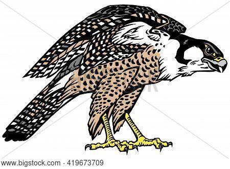 Falcon A Hunter Ready To Fly. Bird Of Prey. Falconry. Isolated Vector Illustration