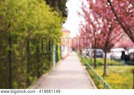 Blurred View Of Alley With Beautiful Blossoming Sakura Trees. Bokeh Effect