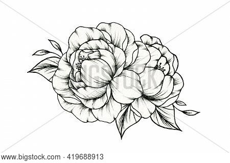 Vintage Peony Flowers Drawing Isolated On White, Black And White Spring Flower Bouquet With Peony Bl