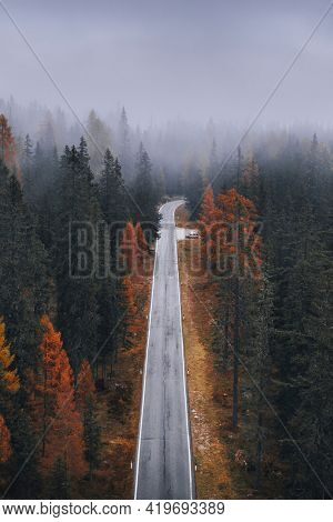 Drone view of a misty coniferous forest in autumn