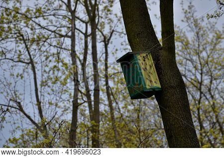 On A Branched Tree Is A Wooden Birdhouse Attached To A Tree In The Color Of Military Camouflage. Sta