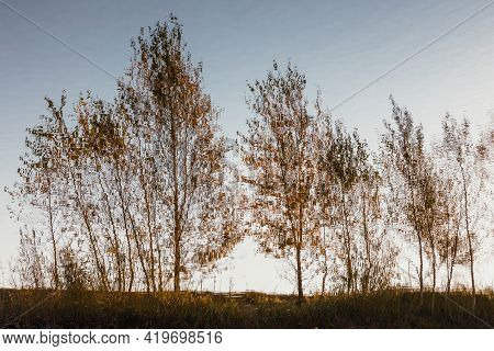 Reflection Of Birch Trees In The Lake Water