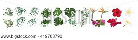 Vector Set Of Tropical Flowers And Leaves. Hibiscus, Monstera, Palm Leaves, Bougainvillea, Strelitzi