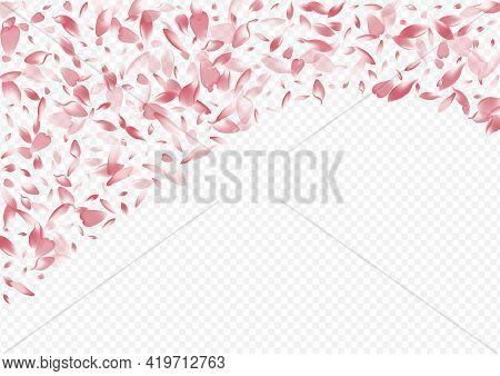 Light Sakura Vector Transparent Background. Petal