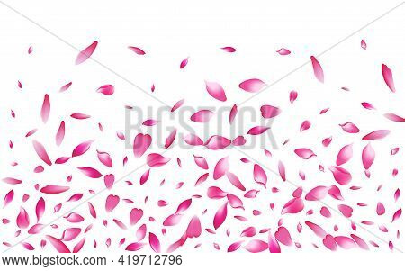 Pink Rose Petal Vector White Background. White