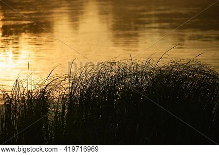 Silhouette Of The Grass On The Lake During Dawn. Dramatic Horizontal Landscape.