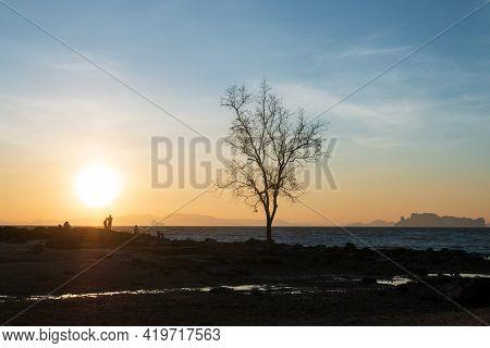 Nature Background Of Seashore Beach Wave And Coastline Sand And Silhouette Tree With Sunset For Holi