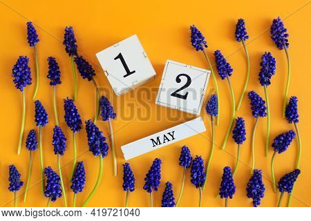 Calendar For May 12: Cubes With The Number 12, The Name Of The Month Of May In English, Scattered Fl