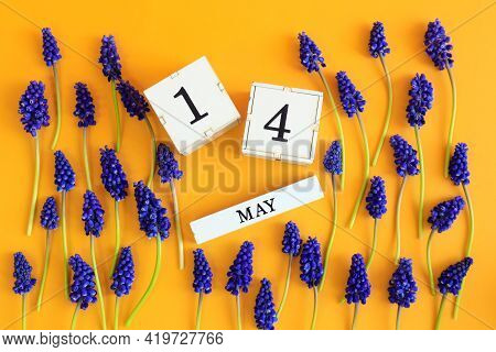 Calendar For May 14: Cubes With The Number 14, The Name Of The Month Of May In English, Scattered Fl