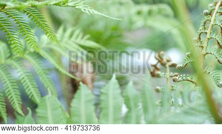 Fern Fresh New Young Green Leaves. Exotic Tropical Amazon Jungle Rainforest, Trendy Botanical Atmosp