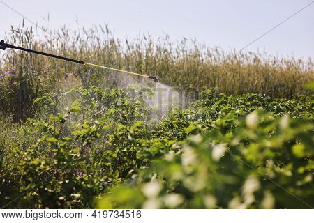 A Farmer With A Mist Sprayer Treats The Potato Plantation From Pests And Fungus Infection. Use Chemi