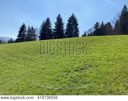 Subalpine Meadows And Livestock Pastures On The Slopes Of The Swiss Mountain Massif Pilatus During E