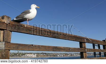 Saltwater Angling, Wooden Pier Boardwalk, Fishing Accessory, Tackle Or Gear. Oceanside California Us