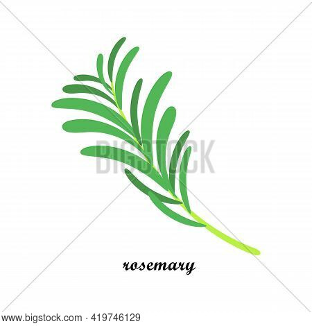 A Sprig Of Medicinal Marshmallow, With Text, Isolated On A White Background. Vector Illustration. Le