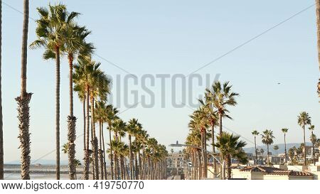 Palm Tree Perspective In Oceanside, California Waterfront Pacific Ocean Tropical Beach Resort, Usa.