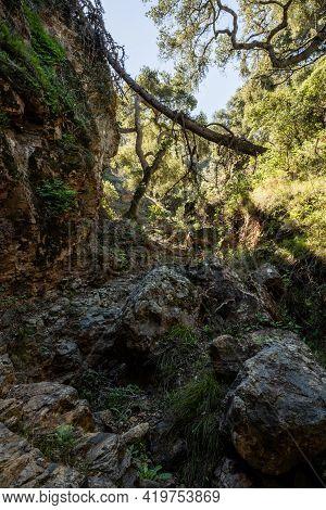 Overgrown Canyon On Santa Cruz Island In Channel Islands National Park