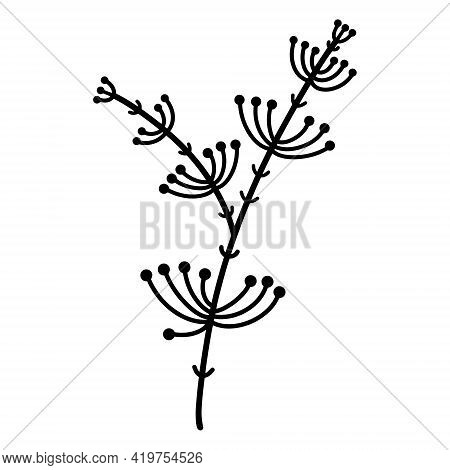 Vector Illustration Of A Branch With Leaves, Inflorescences And Berries. Thin Silhouette Of Grass Ha