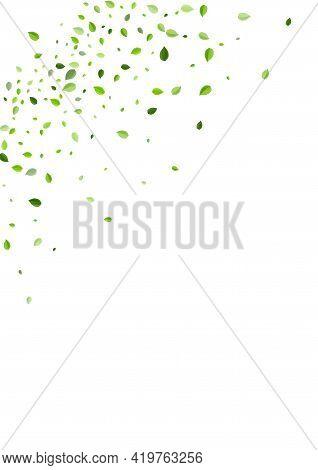 Mint Greens Blur Vector Banner. Forest Foliage