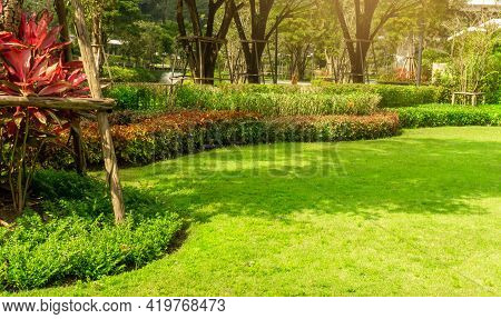 Garden Of Fresh Green Grass Lawn As Carpet Turf With Curve Form Flower And Red Leaves Bush, Greenery