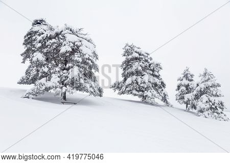 Wooden Bench Under Snowy Pine Tree On A Winter