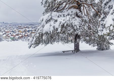 Wooden Bench Under Tree At Peaceful Hill In Winter
