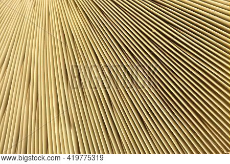 Different Parts Of The Mushroom, Close-up Shot Natural Pattern Gill Or Lamella Of Mushrooms For Natu