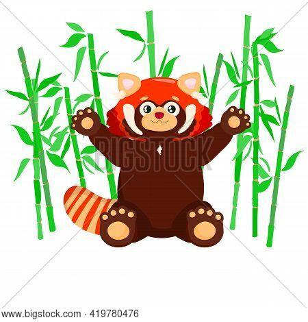 Sitting Cute Red Panda With Bamboo. Little Panda. Ailurus Fulgens On White Background.