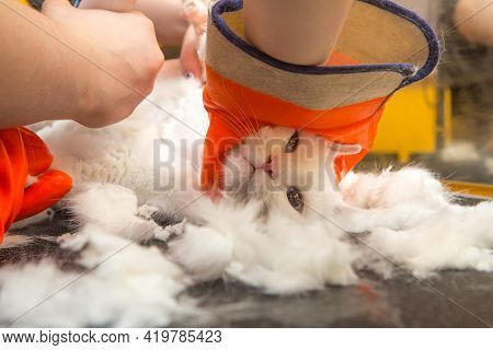 Cat Grooming In Pet Grooming Salon. Woman Uses The Trimmer For Trimming Fur.