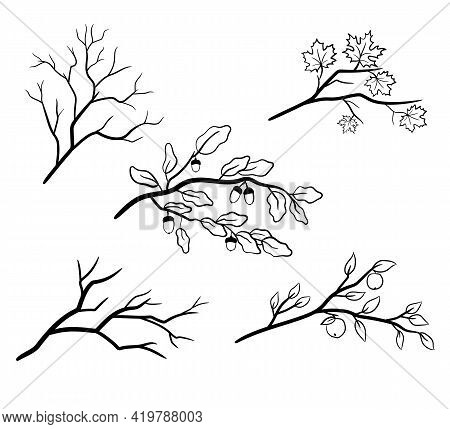 A Set Of Tree Branches With Maple, Oak And Apple Leaves. Naked Autumn Branches Of Trees. Vector Illu
