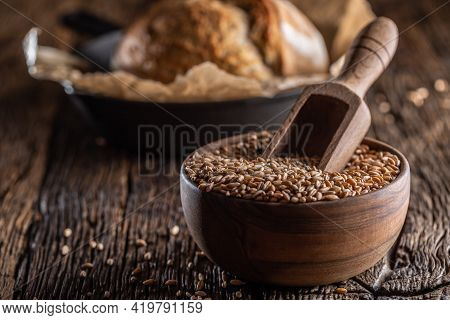 Wheat Grains-the Main Ingredient Of The Bread Filled In Wooden Bowl And Wooden Rustic Scoop Stitched