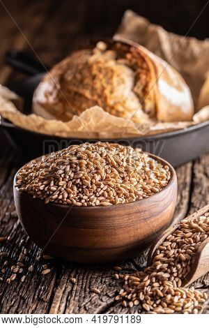 Wheat Grains-the Main Ingredient Of The Bread Filled In Wooden Bowl And Wooden Rustic Scoop. Bakend