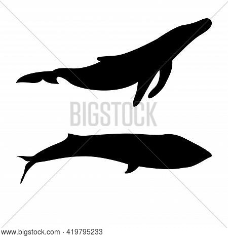 Vector Silhouette Of A Whale. Blue Whale, Killer Whale. Underwater Animal. Silhouette Of A Large Fis