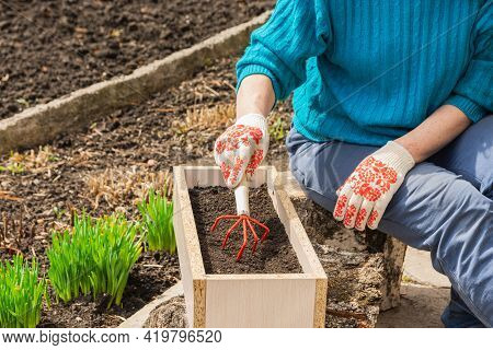 A Woman Loosens The Soil In A Box, Prepares The Soil For Planting Plants. Spring Or Summer Garden Wo