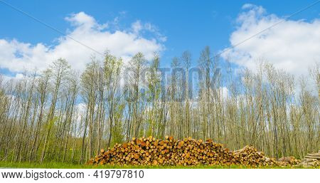Stack Of Tree Trunks In Green Grass Along Trees In Blue Sunlight In Spring, Almere, Flevoland, The N