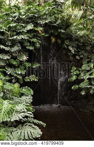 Small Waterfall In Rainforest Surrounded By Green Leaves