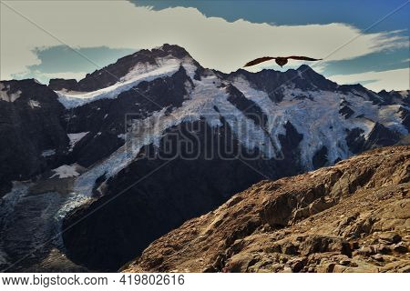 Mountain Peaks, Glaciers And An Alpine Kea Parrot Flying High
